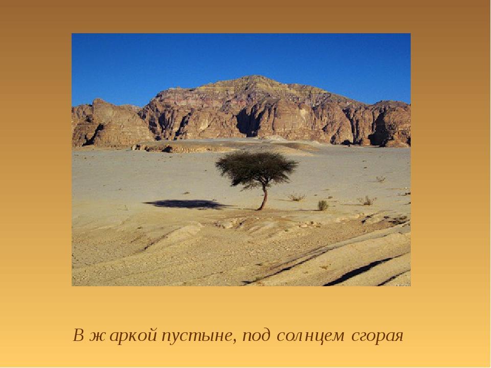 В жаркой пустыне, под солнцем сгорая