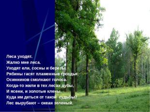 Леса уходят. Жалко мне леса. Уходят ели, сосны и березы. Рябины гасят пламенн