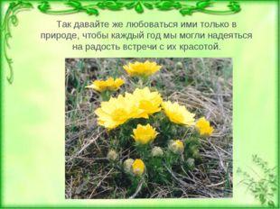 Тюльпан двуцветный Так давайте же любоваться ими только в природе, чтобы кажд
