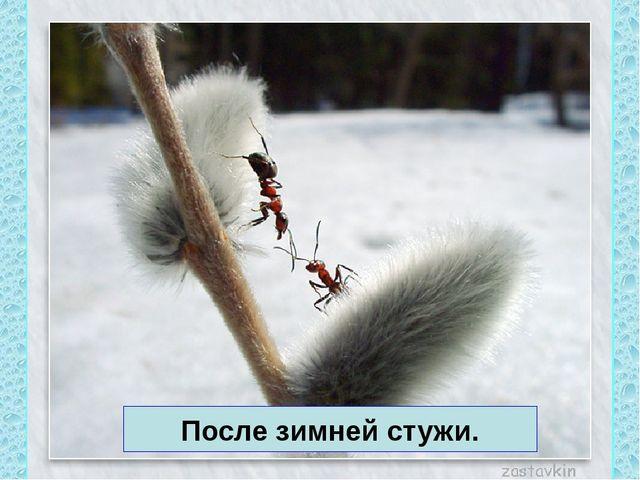 После зимней стужи.