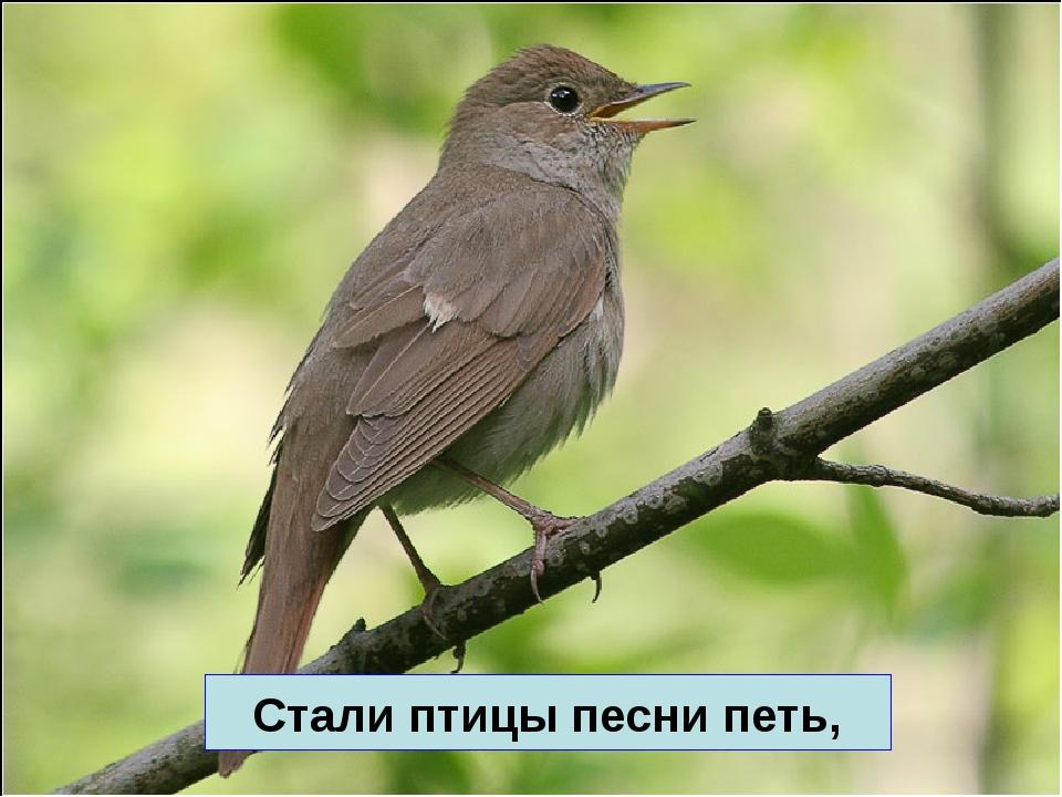Стали птицы песни петь,