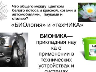 Что общего между цветком белого лотоса и краской, котами и автомобилями, паук