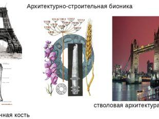 Архитектурно-строительная бионика стволовая архитектура бедренная кость принц