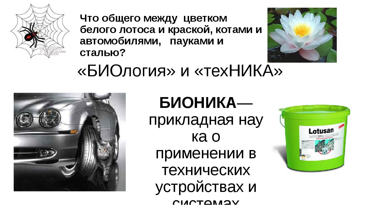 Что общего между цветком белого лотоса и краской, котами и автомобилями, паук...