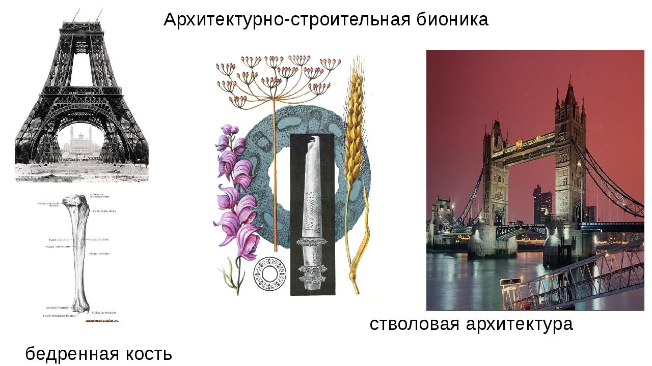 Архитектурно-строительная бионика стволовая архитектура бедренная кость принц...