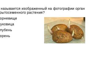 Как называется изображенный на фотографии орган покрытосеменного растения? 1)