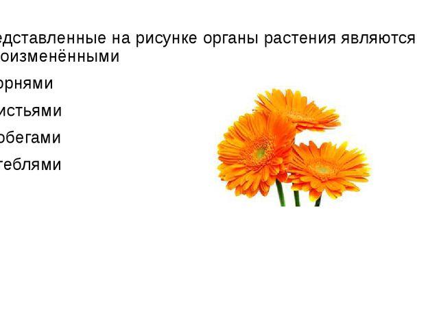 Представленные на рисунке органы растения являются видоизменёнными 1)корнями...