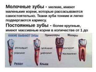 Молочные зубы - мелкие, имеют маленькие корни, которые рассасываются самостоя