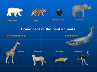 Some best of the best animals polar bear tiger elephant giraffe chimpanzee ch