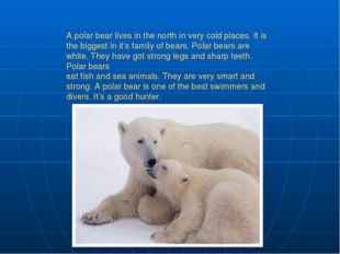 A polar bear lives in the north in very cold places. It is the biggest in it'