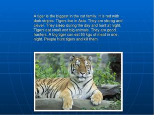 A tiger is the biggest in the cat family. It is red with dark stripes. Tigers