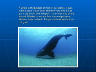 A whale is the biggest animal on our planet. It lives in the ocean. It can sw