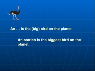 An … is the (big) bird on the planet An ostrich is the biggest bird on the pl