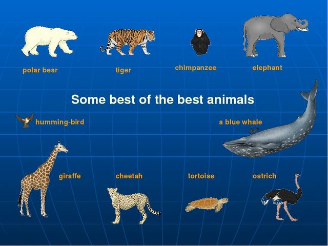 Some best of the best animals polar bear tiger elephant giraffe chimpanzee ch...