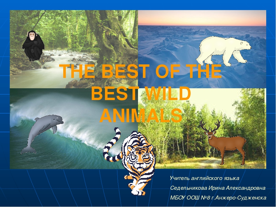 THE BEST OF THE BEST WILD ANIMALS Учитель английского языка Седельникова Ирин...