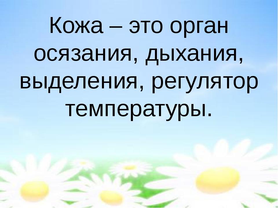 Кожа – это орган осязания, дыхания, выделения, регулятор температуры.