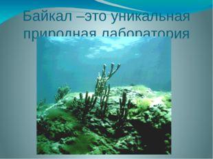 Байкал –это уникальная природная лаборатория