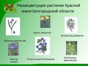 Раннецветущие растения Красной книги Белгородской области Адонис весенний Вет