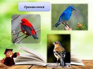 Орнитология