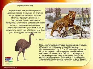 Европейский лев Европейский лев жил во времена древних греков и римлян. Обита