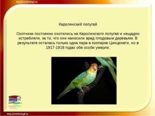 Каролинский попугай Охотники постоянно охотились на Каролинского попугая и не