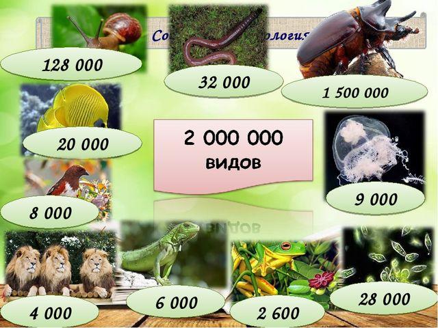 Современная зоология 4 000 9 000 20 000 32 000 6 000 2 600 128 000 28 000 8 0...