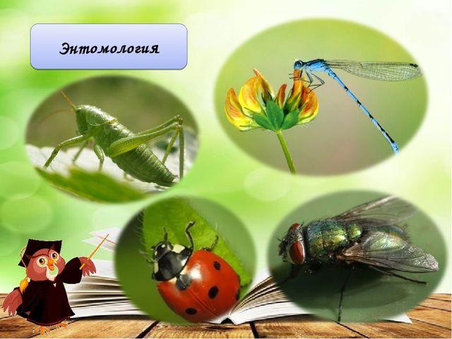 Энтомология