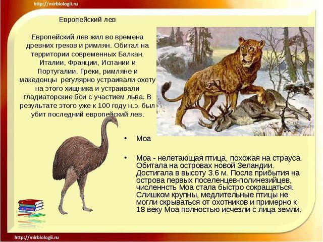 Европейский лев Европейский лев жил во времена древних греков и римлян. Обита...