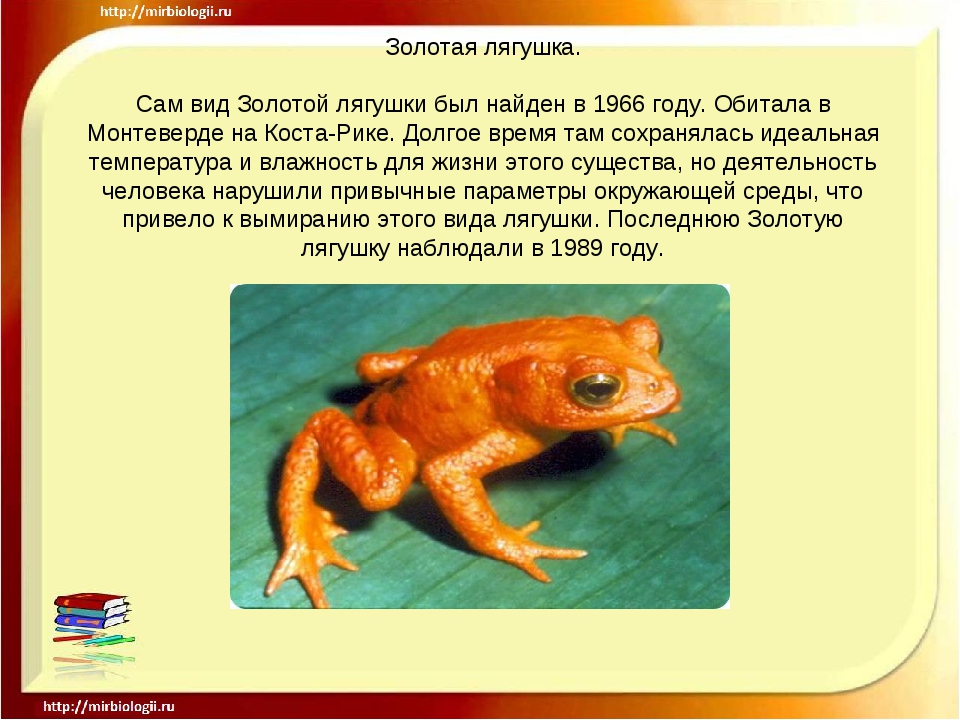 Золотая лягушка. Сам вид Золотой лягушки был найден в 1966 году. Обитала в Мо...