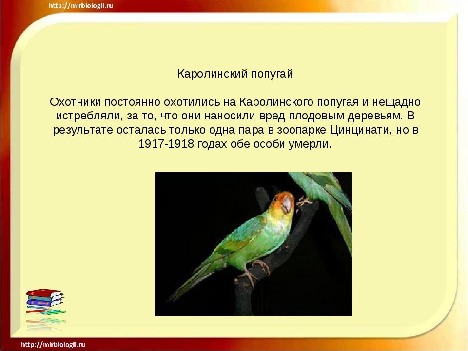 Каролинский попугай Охотники постоянно охотились на Каролинского попугая и не...