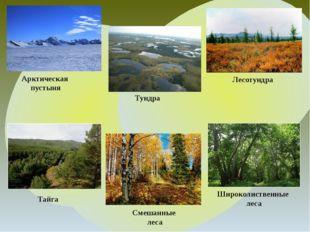 Арктическая пустыня Тундра Лесотундра Тайга Широколиственные леса Смешанные