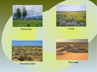 Степь Полупустыня Лесостепь Пустыня
