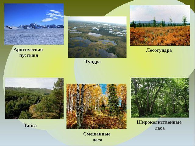 Арктическая пустыня Тундра Лесотундра Тайга Широколиственные леса Смешанные...