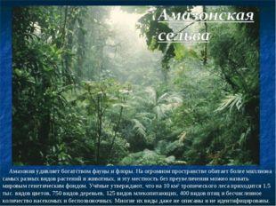 Амазония удивляет богатством фауны и флоры. На огромном пространстве обитает