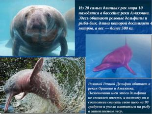 Розовый Речной Дельфин обитает в реках Ориноко и Амазонка. Позвоночник шеи эт
