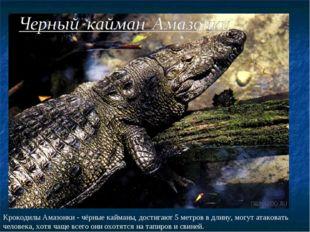 Крокодилы Амазонки - чёрные кайманы, достигают 5 метров в длину, могут атаков