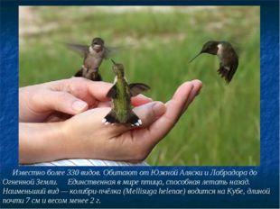 Известно более 330 видов. Обитают от Южной Аляски и Лабрадора до Огненной Зе