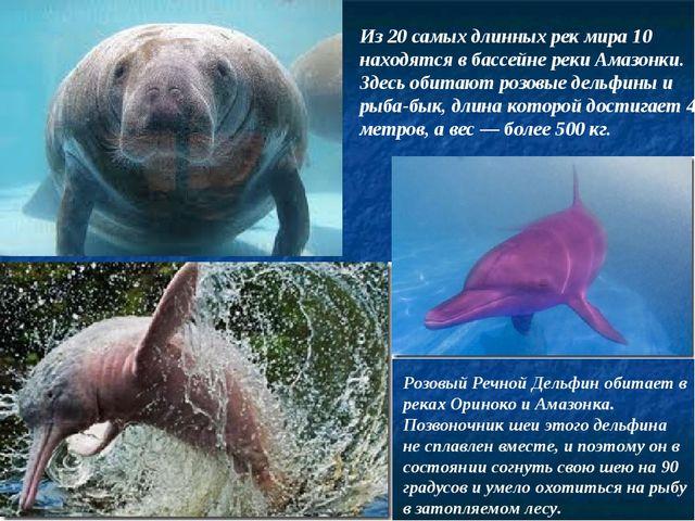 Розовый Речной Дельфин обитает в реках Ориноко и Амазонка. Позвоночник шеи эт...