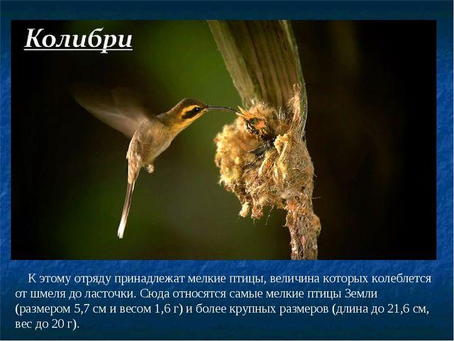 К этому отряду принадлежат мелкие птицы, величина которых колеблется от шмел...