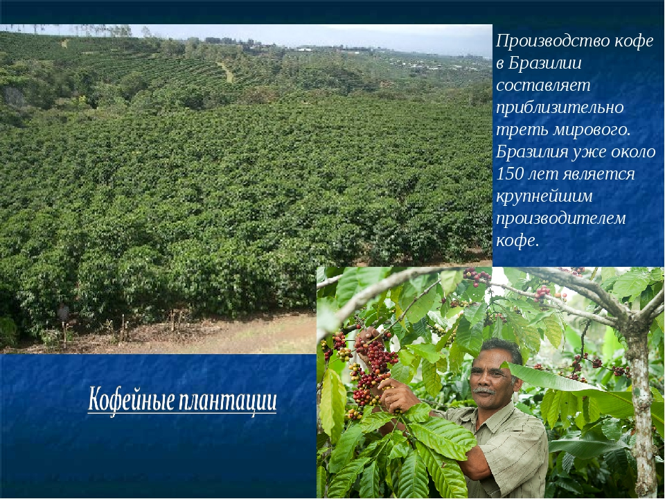 Производство кофе в Бразилии составляет приблизительно треть мирового. Бразил...