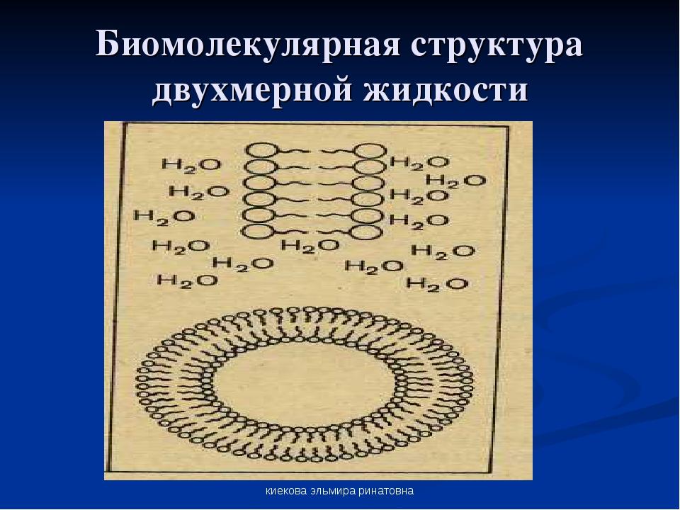 киекова эльмира ринатовна Биомолекулярная структура двухмерной жидкости киеко...