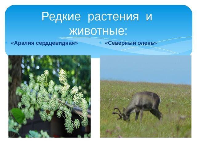 Редкие растения и животные: «Аралия сердцевидная» «Северный олень»
