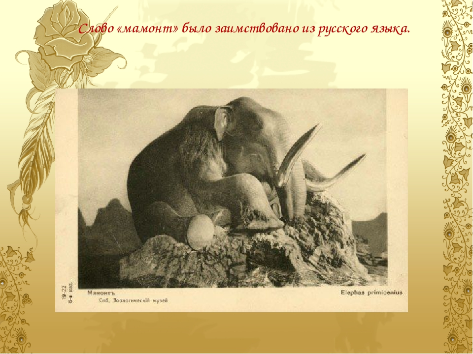 Слово «мамонт» было заимствовано изрусского языка.