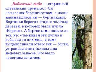 Добывание меда — старинный славянский промысел. Он назывался бортничеством,