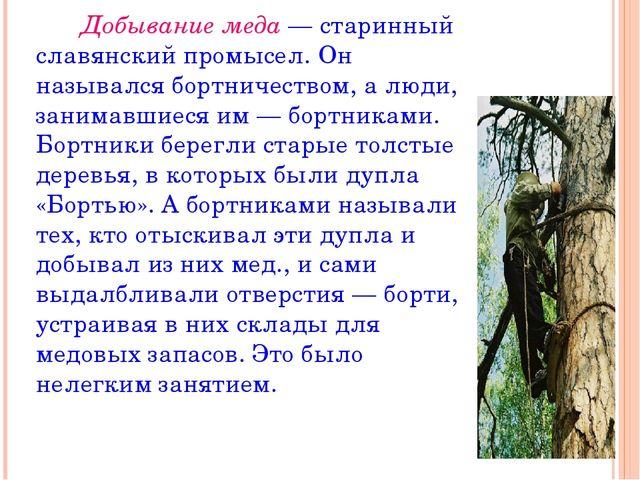 Добывание меда — старинный славянский промысел. Он назывался бортничеством,...