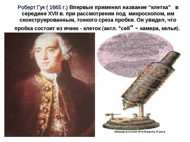 """Роберт Гук ( 1665 г.) Впервые применил название """"клетка"""" в середине XVII в. п..."""