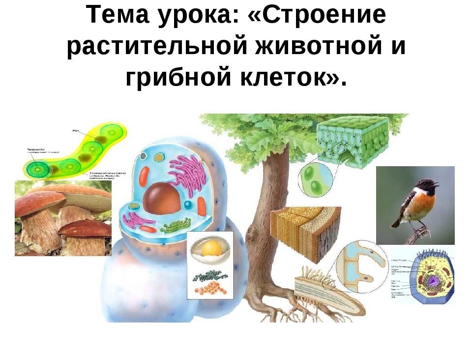 Тема урока: «Строение растительной животной и грибной клеток».