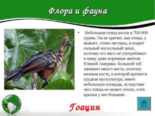 Флора и фауна Небольшая птица весом в 700-900 грамм. Он не кричит, как птица