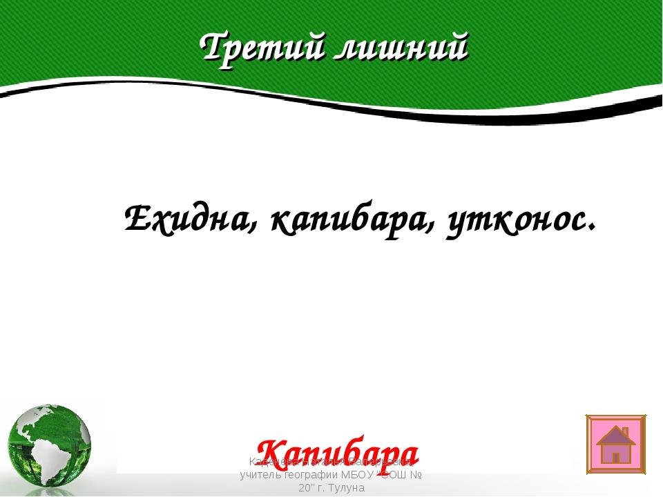 Третий лишний Text in here 2005 2006 2007 2008  Ехидна, капибара, утконос. К...