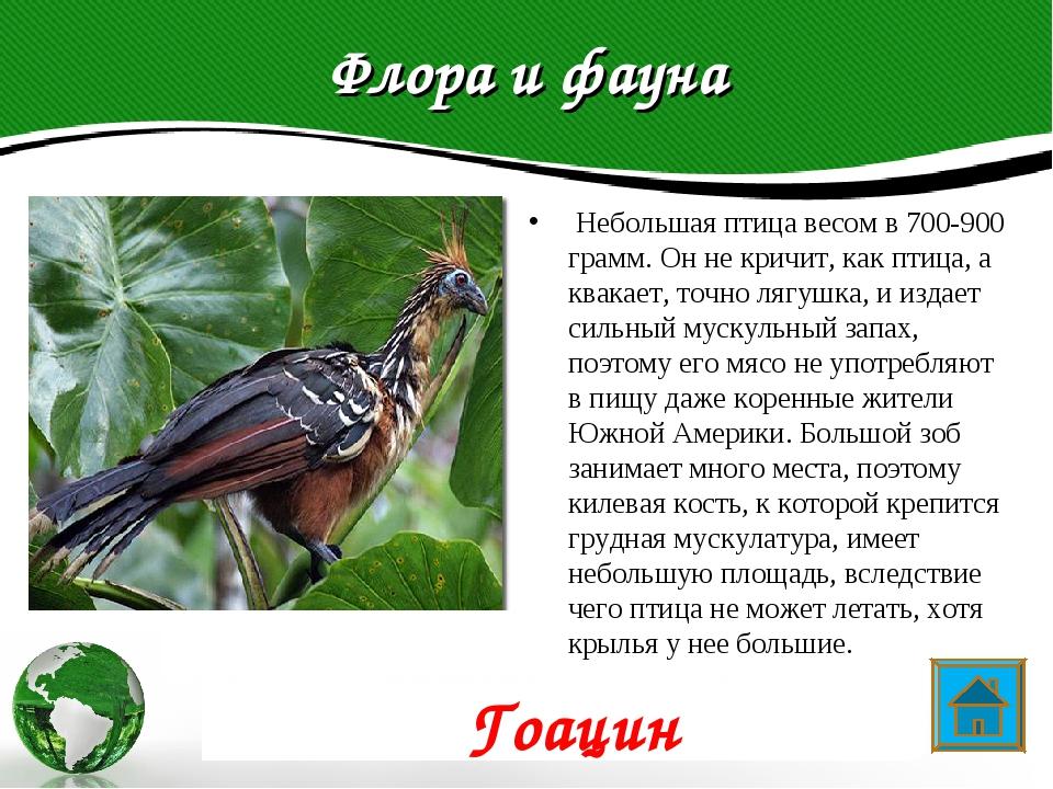 Флора и фауна Небольшая птица весом в 700-900 грамм. Он не кричит, как птица...